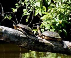 Choisir le Costa Rica comme destination de vacances de noel pour ses enfants